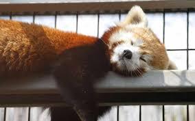 昼寝 画像①