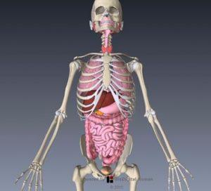 内臓器 画像